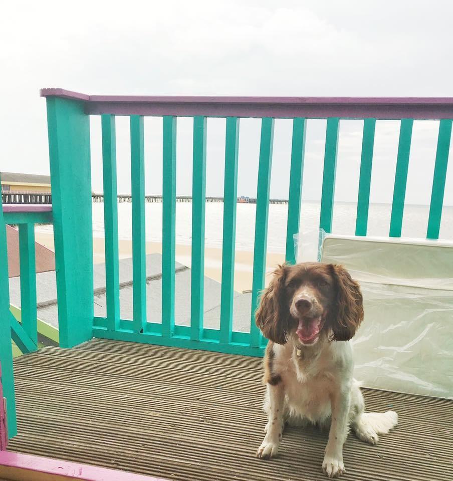 Beach_Hut_Hire_Millie