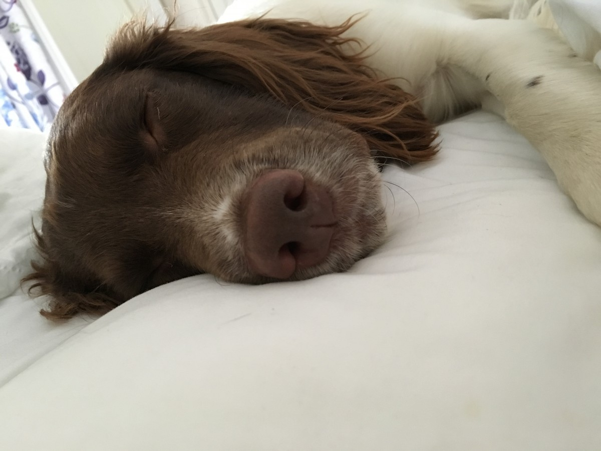 Millie_Dog_who_saved_my_life