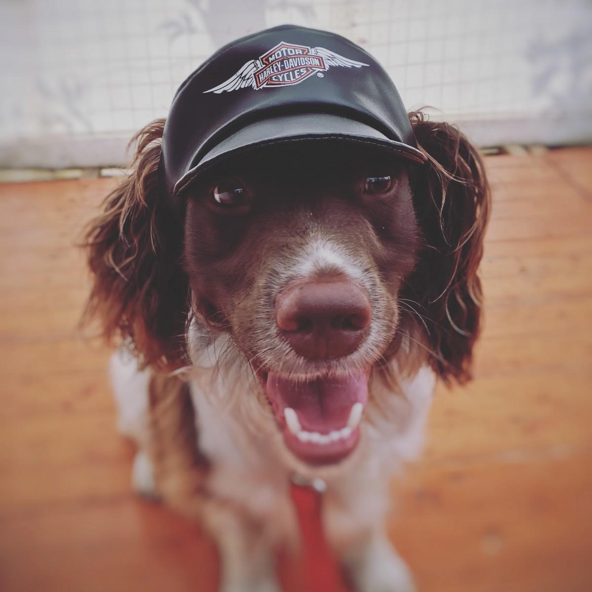 Millie in Harley Davidson hat Thunder in the Glens 2016