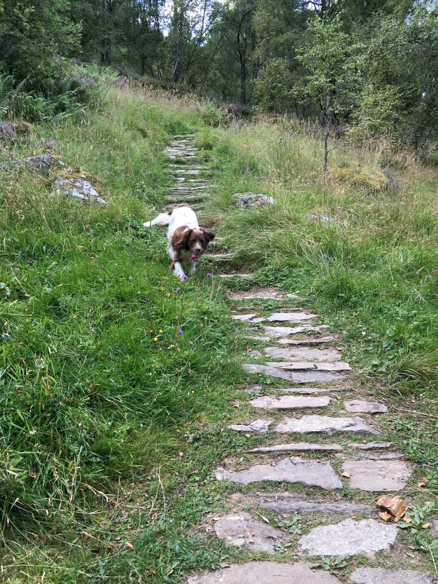 Dog Walks in Aviemore Craigellachie Nature Reserve