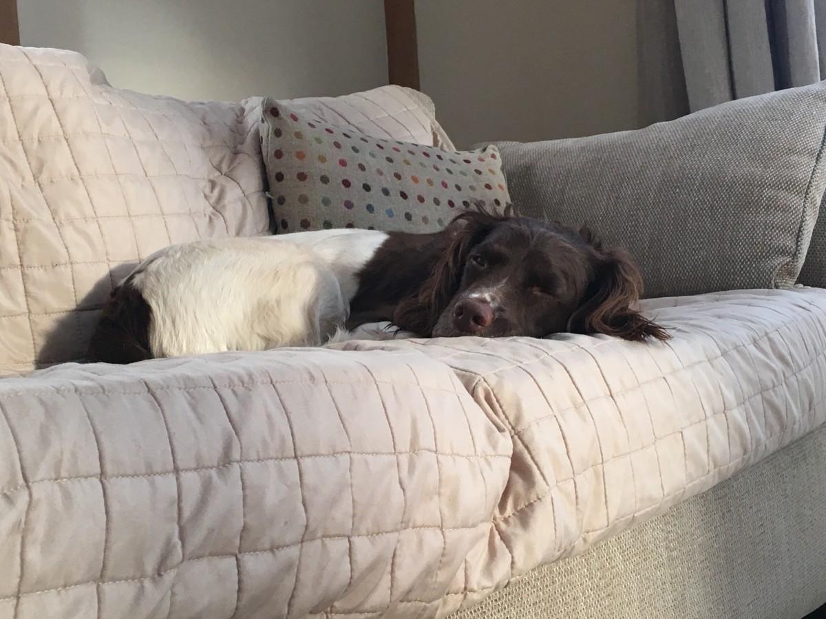 Dog Friendly Family Hold Brecon Breacons Brecon Retreat
