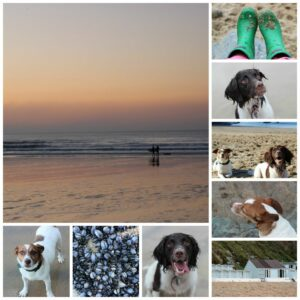 Dog Friendly Holiday: A review of Lusty Glaze Beach Cottage