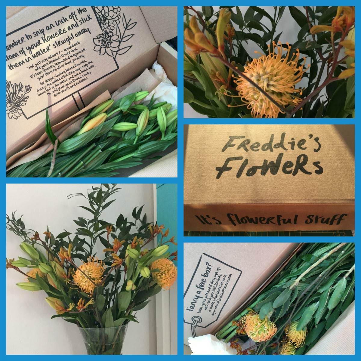 Freddie's Flower Subscription Box to your door