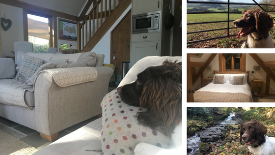 Photo Collage of Dog Friendly Holiday at Carys Arms