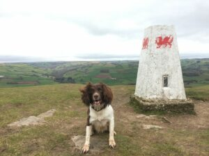 Dog Friendly Holiday in Brecon Beacons:  Brecon Retreat (Reviewed)