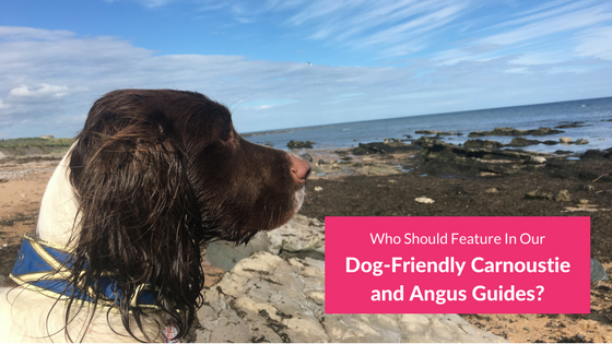 Dog-Friendly Carnoustie and Angus Guides