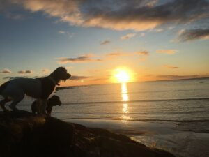 Beach Hut Life: My October (2017) RoundUp